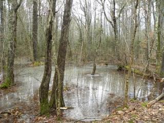 Rye Woods